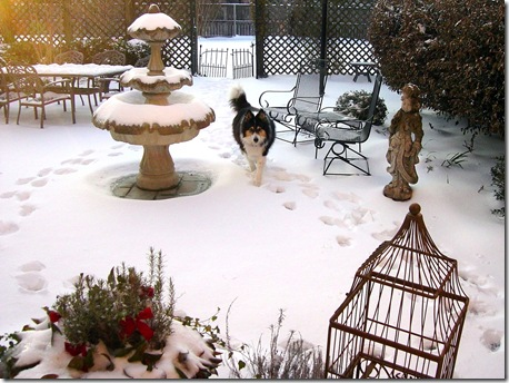 Snow Dog 2010